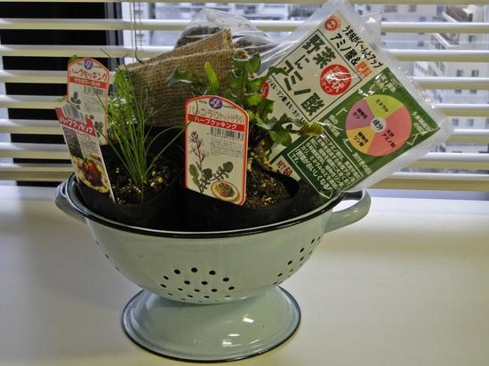 花くらす*野菜くらす「サラダハーブの寄せ植え栽培キット」