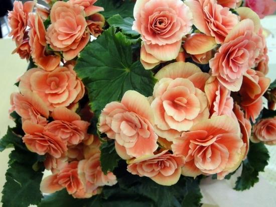 母の日プレゼント花鉢