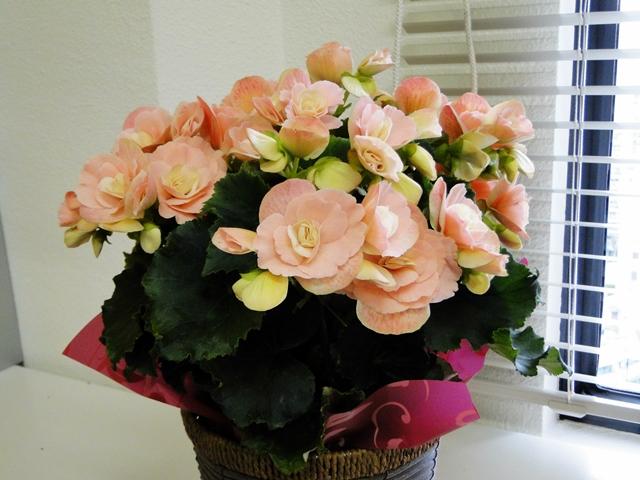 http://gift.tsuu.info/mother/img/20130303DSC09888.JPG