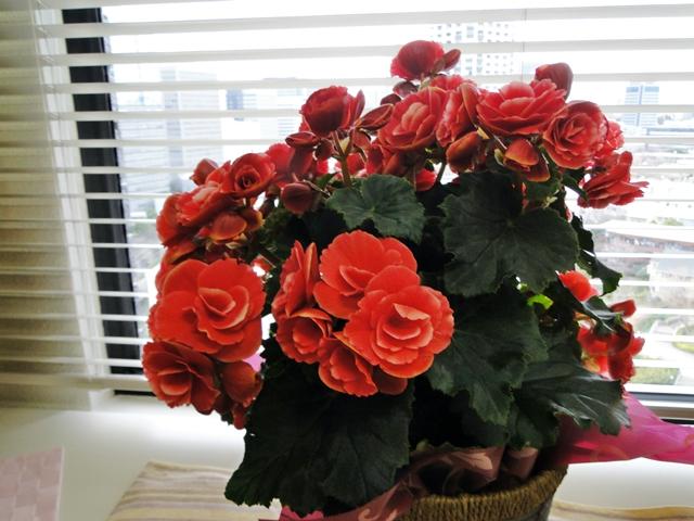 http://gift.tsuu.info/mother/img/20130303DSC09891.JPG