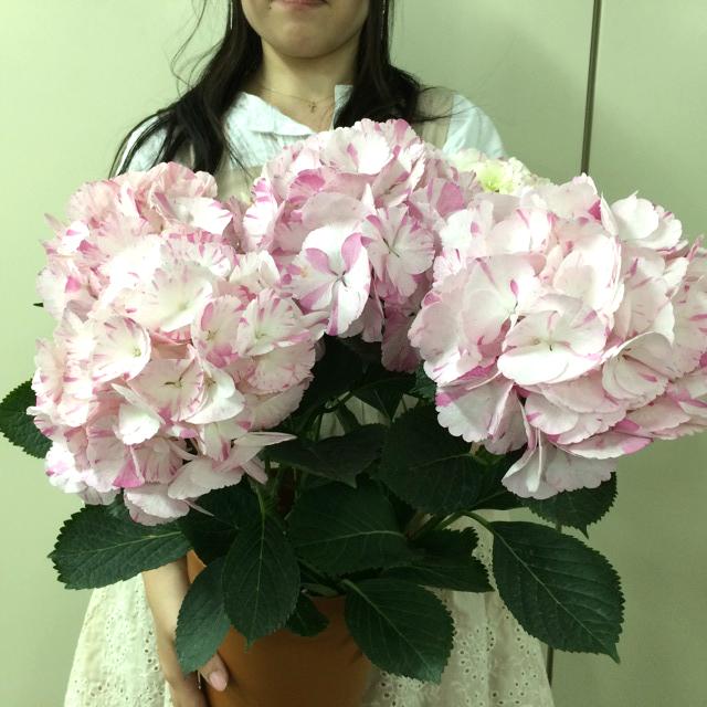 http://gift.tsuu.info/mother/img/SA60200440_0428_a04.JPG