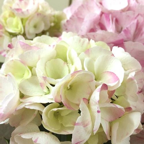 http://gift.tsuu.info/mother/img/SA60200440_0428_a08.JPG